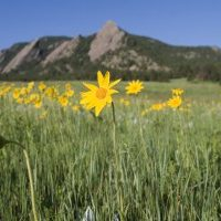 Wildflowers growing near the Flat Irons